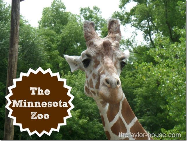 Minnesotazoo_thumb.jpg