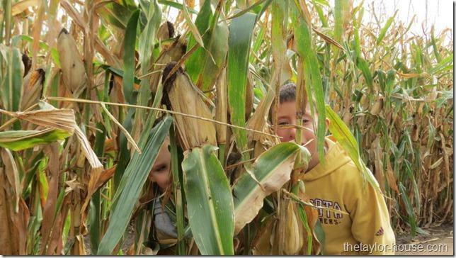 Twin Cities Harvest Festival & Maze