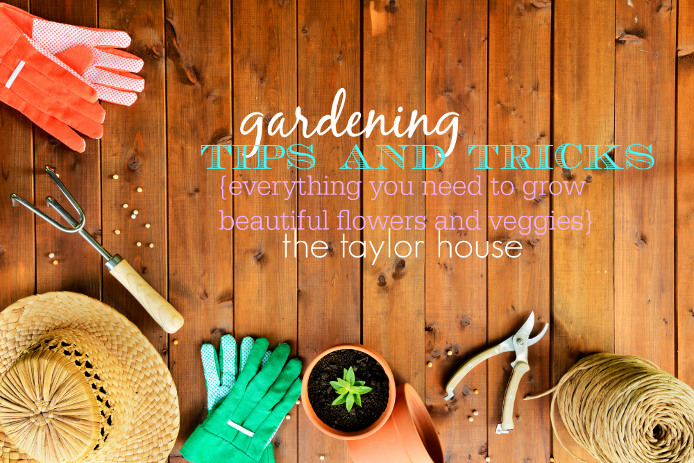 Garden Planning Tips and Tricks to grow delicious veggies this summer!