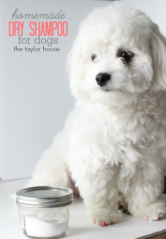Loving My Pet: DIY Dry Shampoo for Dogs