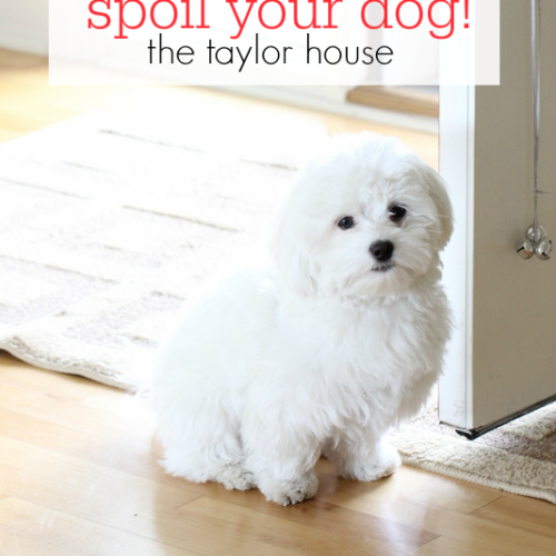 Five Ways to Spoil Your Dog
