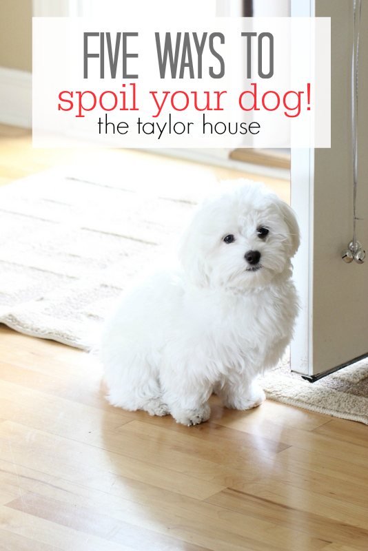 Five Ways to Spoil Your Dog with Cesar Food!