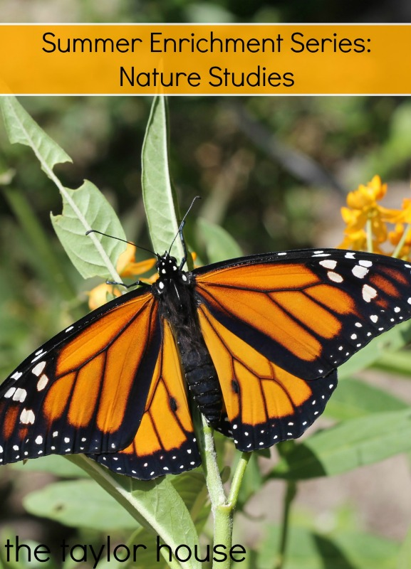 Summer Enrichment Series for Kids: Nature Studies!