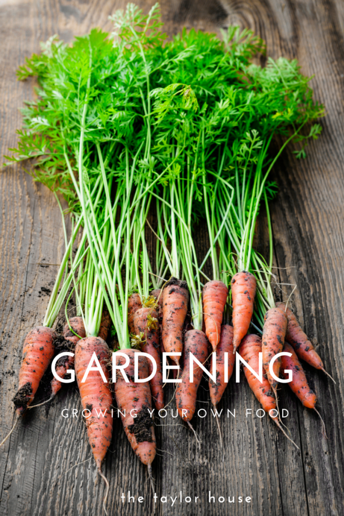 Gardening: Growing your own food!