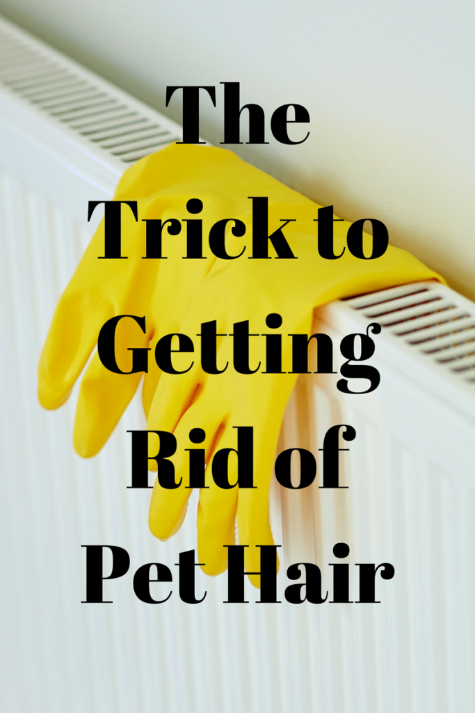 The Trick to getting Rid of Pet Hair