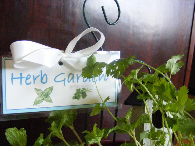 DIY Herb Garden for the kitchen